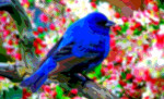 Animal Art Blue Bird