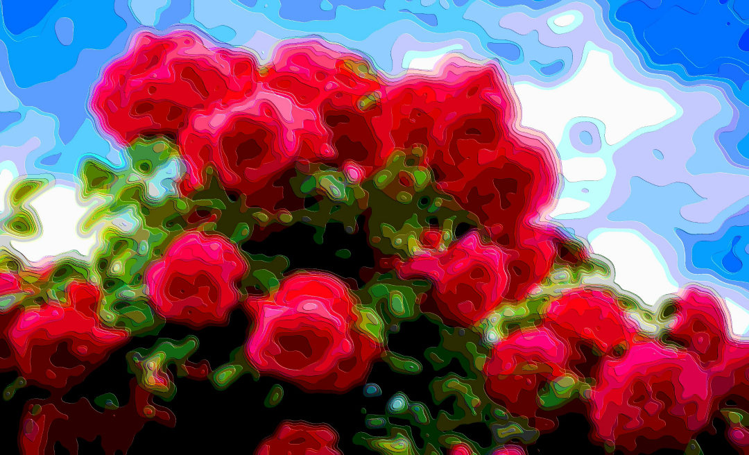 Art Prints Roses