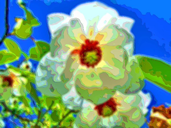 Flower Art Sale Magnolia Wilsonii