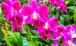 Flower Art Sale Orchids
