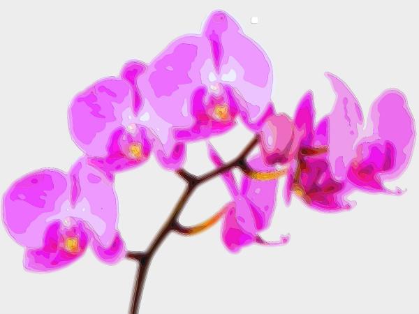 Flower Art Sale Purple Orchid