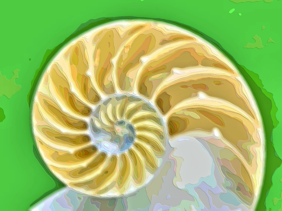 Art Print Seashells