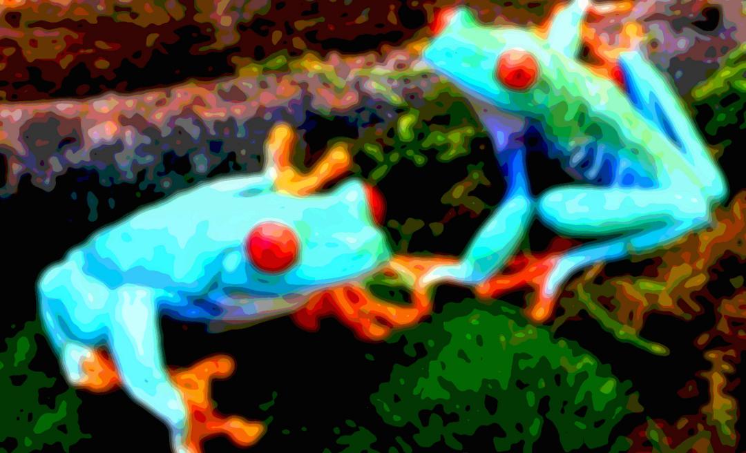 Animal Art Frogs