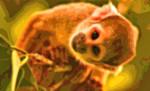 Animal Art Monkey