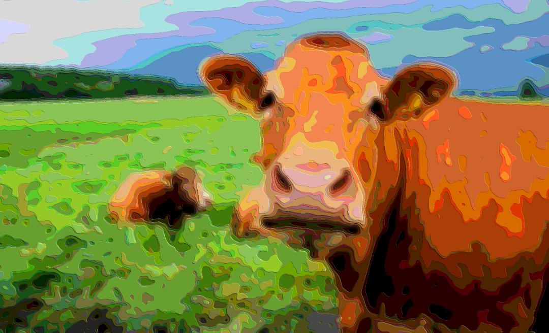 Animal Art, Moo Cow