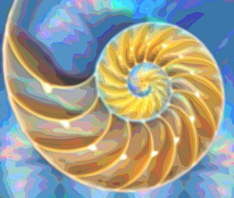 Nautilus Seashell
