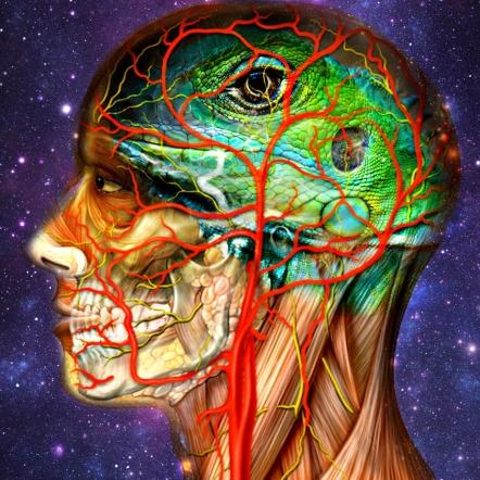 Art Human Anatomy Lizard Brain